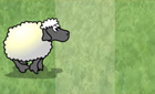 section_sheep.jpeg